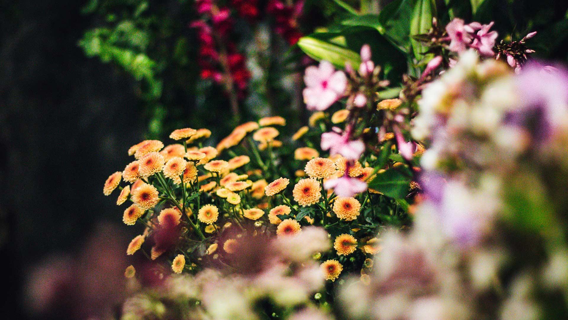 Erica Berry Flowers